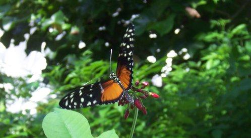 Butterfly Key West-500W.jpg
